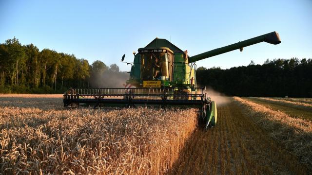 champ de blé moissonneuse