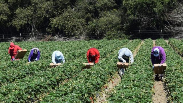 Ceuilleuses de fraises huelva