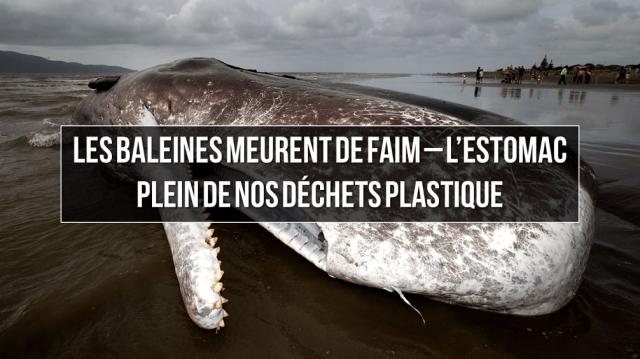 baleine Plastique