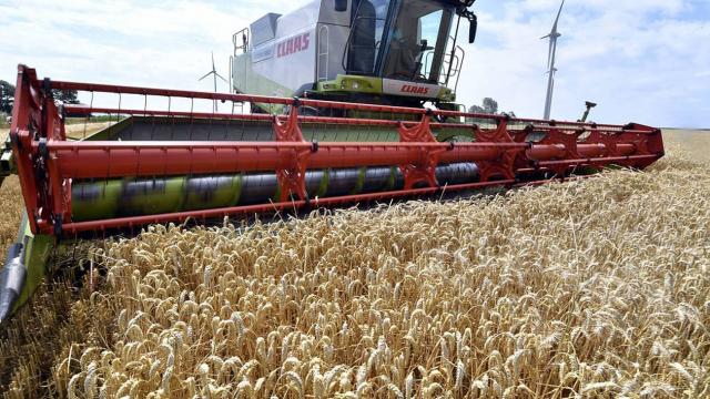 champ de blé céréales