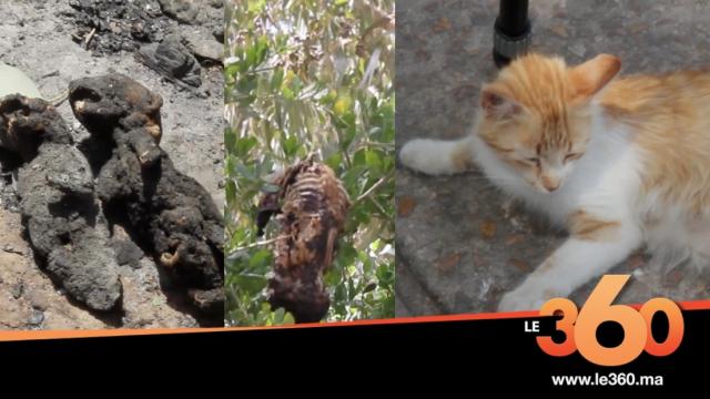 cover: القصة الكاملة لواقعة حرق 40 قطا بمدينة أسفي