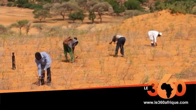 Vidéo. Mali: Plateau dogon: de nouvelles techniques associées aux méthodes agricoles ancestrales