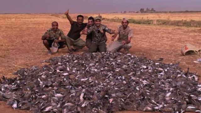 Massacre de tourterelles Marrakech
