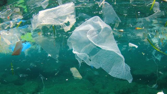 Pollution de le Méditerranée