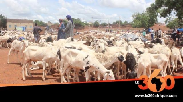 Vidéo. Mali: les moutons plus chers à cause de l'insécurité dans le Centre
