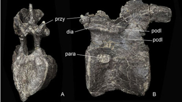 Stégosaure2