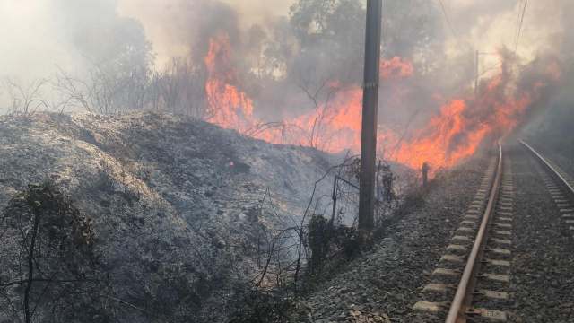 Incendie forêt Boufrah 3