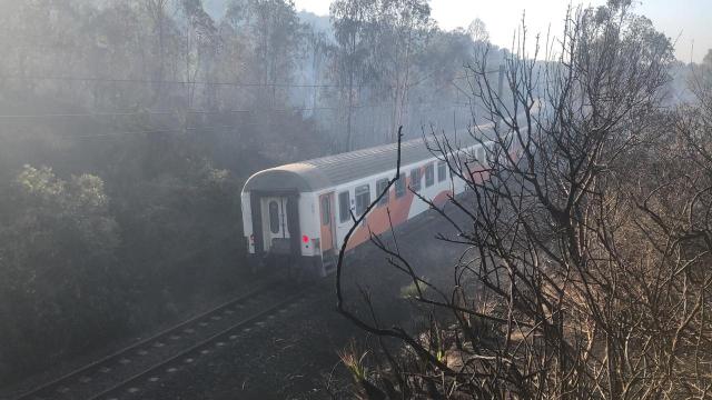 Incendie forêt Boufrah