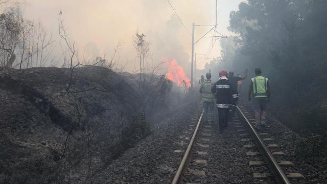 Incendie forêt Boufrah 5