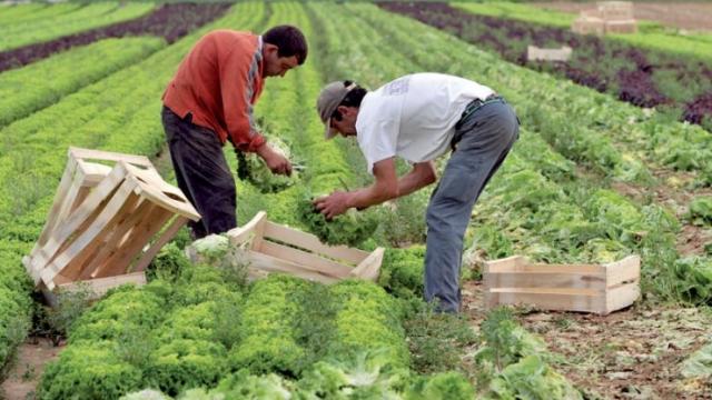 Fiscalité agricole Agriculture
