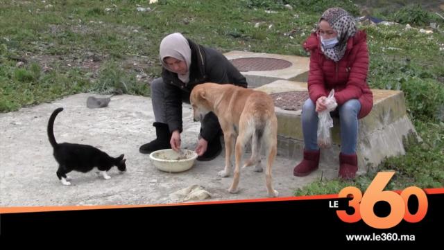 Cover Vidéo - في زمن كورونا.قطط وكلاب طنجة الضالة تجد لها شباب يطعمها