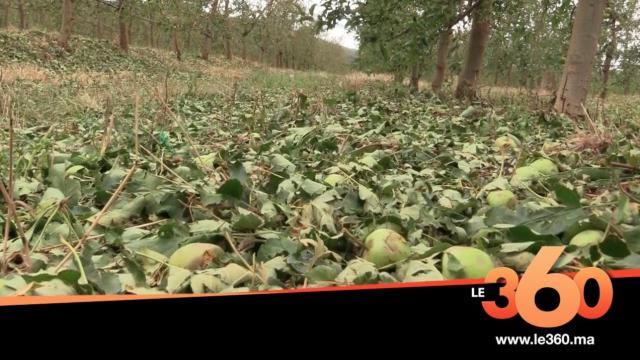 """Cover Vidéo - """"التَّبروري"""" يُتلف المحاصيل الزراعية ضواحي إيموزار كندر"""