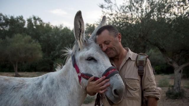 Thérapie avec des ânes
