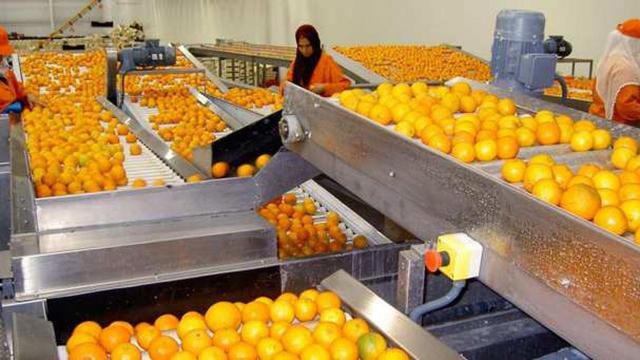 clémentines exportation agriculture