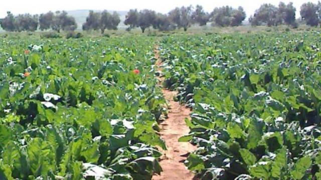 Agriculture Casa-Settat