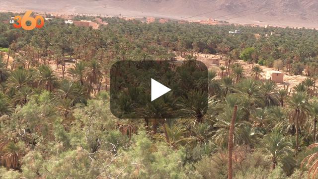 cover: تمور أزيزا.. تعرف على أجود تمور واحة فكيك التي نهبتها الجزائر