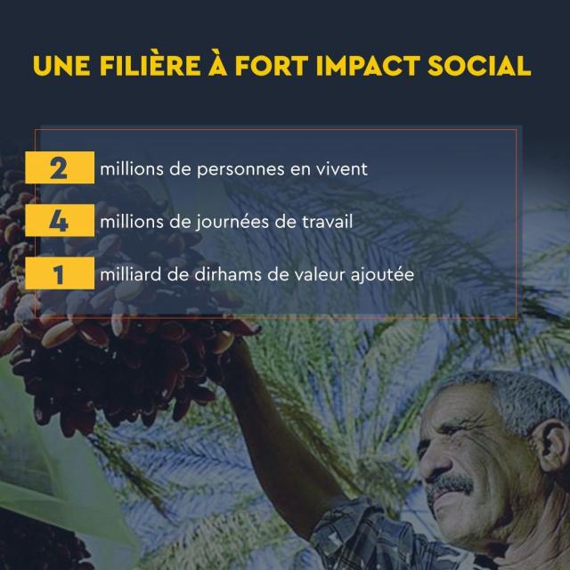 Impact social palmier