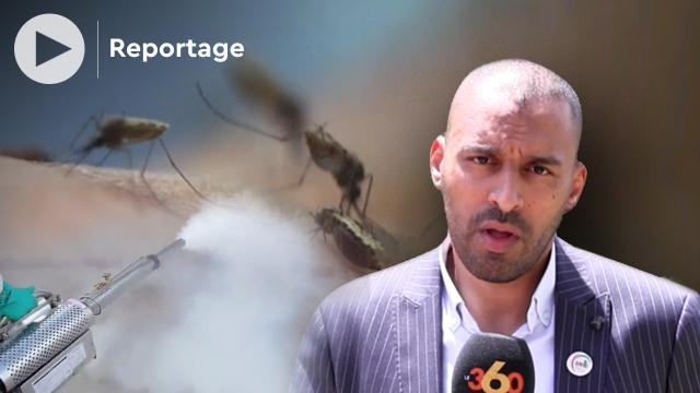 cover vidéo Marrakech: les moustiques attaquent déjà, les explications d'un spécialiste