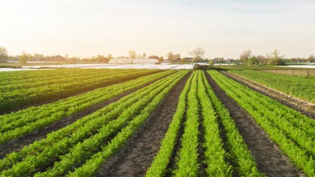 Agriculture: Jardins de Touzaikou, le bio au service de l'économie  solidaire | www.le360.ma