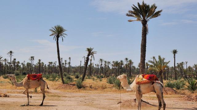 Palmeraie de Marrakech - Météo