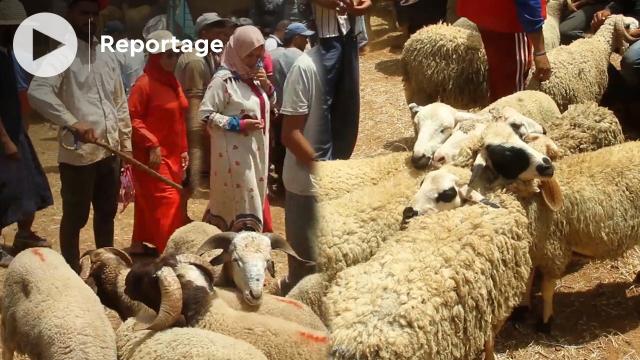 cover: سوق شعبي بسلا يبرز غلاء الخروف