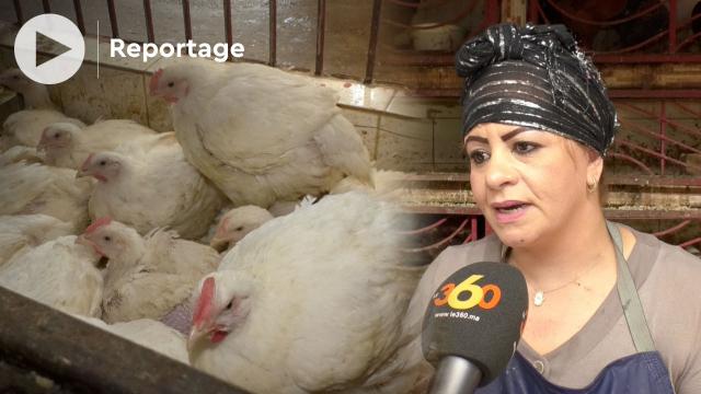 Cover Vidéo - prix du poulet - crise sanitaire - inflation