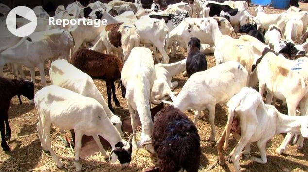 Vidéo. Mauritanie: voici pourquoi la viande est chère à Nouakchott, malgré l'abondance du cheptel