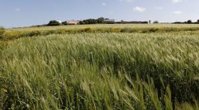 Blé Agriculture Bien