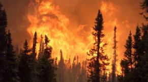 incendie forêt