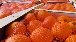 Maroc Agrume exportation