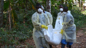 ebola fin