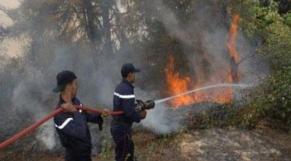 incendie forêt larache