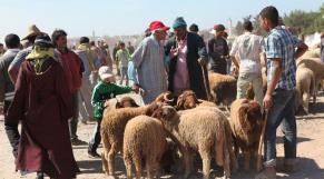 marché du mouton