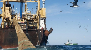 pêche en mauritanie