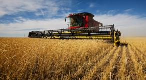 agriculture sénégal