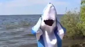 shark ira cover