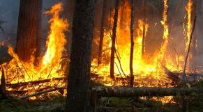 Larache: le feu ravage 40 hectares de forêt