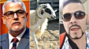 Adil Miloudi défi moutons Benky