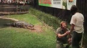 cover crocodile