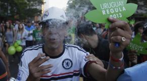 cannabis urugay