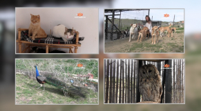 Cover Video -Le360.ma • بالفيديو...  سليمة القضاوي والنداء الاخير لسيدة وهبت حياتها للعناية بمئات الحيوانات