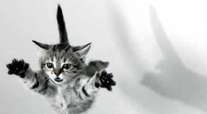 Chat dans les airs