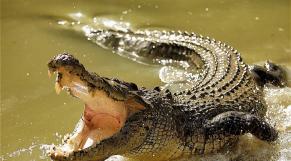 Cover: Le Zoo de Rabat accueille trois nouveaux crocodiles du Nil