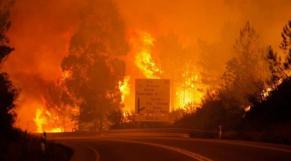 Incendie de forêt portugal