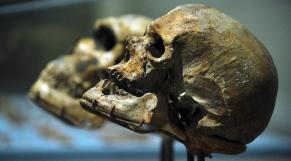 homo sapiens jbel irhoud