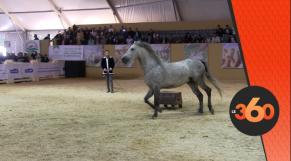 cover: معرض الفلاحة بمكناس..الخيول الأصيلة تبهر الزوار