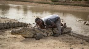 Crocodile du Burkina Faso