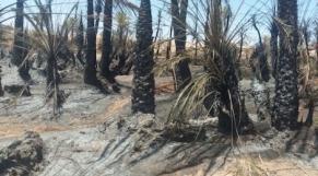 Tata-palmeraie en feu