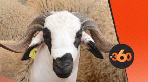 cover vidéo:Le360.ma •مواصفات مهمة لابد من مراعاتها قبل شراء خروف العيد
