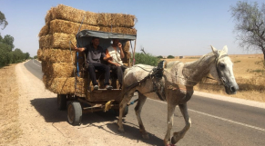 Oued Zem-chevaux